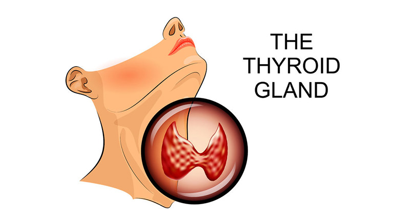 Your Thyroid Gland: Small but Mighty - Up & Up Health